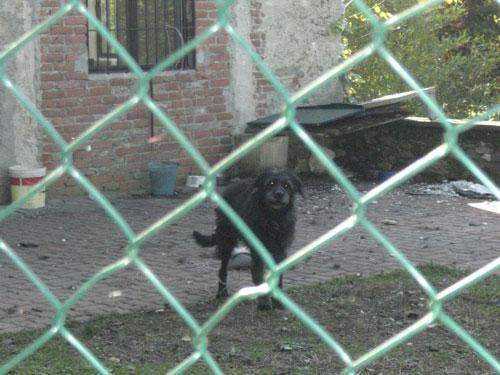 Il cagnolino liberato dalla polizia ecozoofila