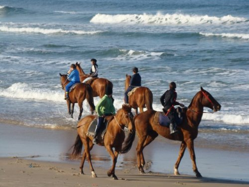 uruguay, cavallo, turismo