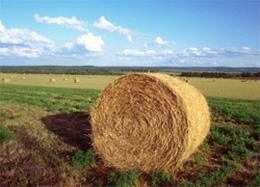 agricoltura da conservare