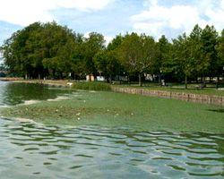 Le alghe fioriscono sul lago