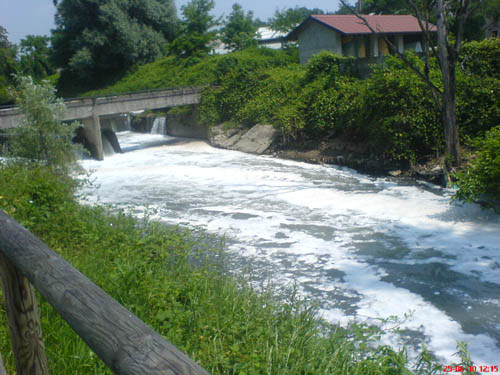 Schiuma bianca nel fiume olona, moria di pesci