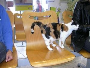 gatto che vive in posta