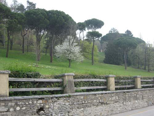 Barasso è un comune verde e tranquillo