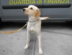 cash dog guardia di finanza