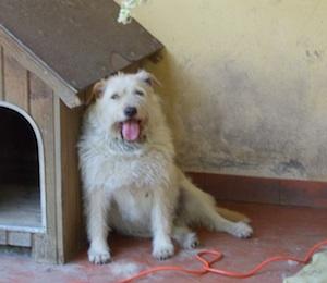 cane gemonio foto