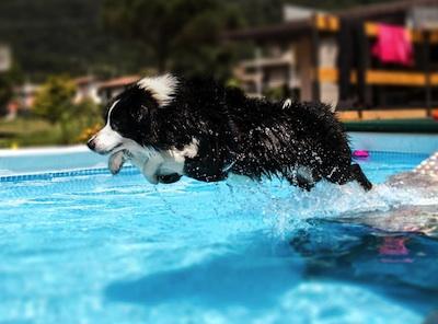 cane piscina foto