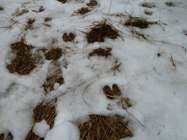 caccia golasecca impronte