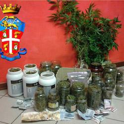 cuvio marijuana apertura
