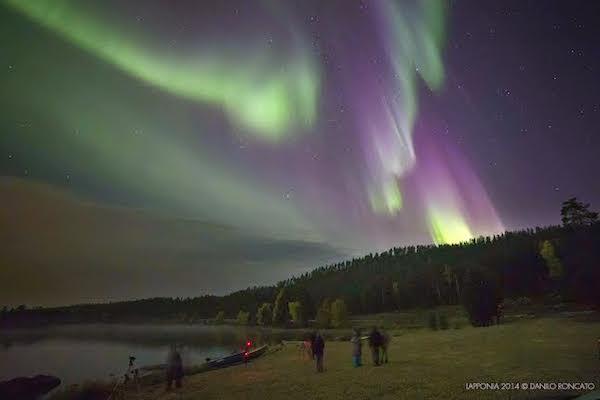 aurora gatt foto