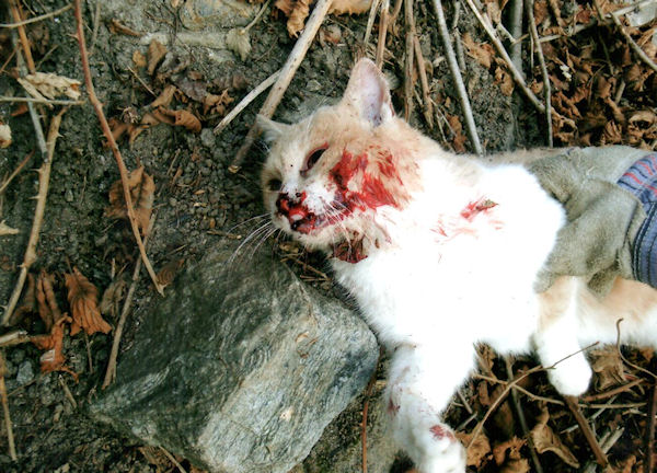 gatto ucciso a biasca