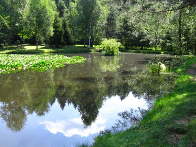 Che fine ha fatto il lago delle tartarughe varesenews for Lago tartarughe