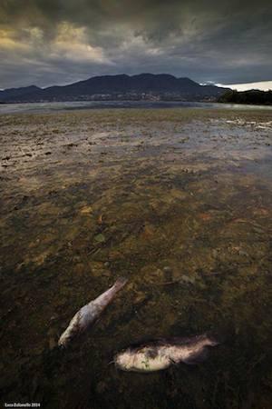 cazzago lago alghe