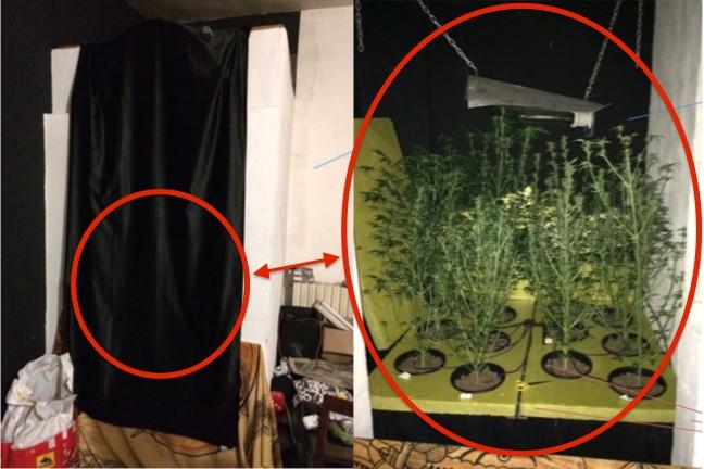 Una piantagione in camera da letto denunciato per piante di